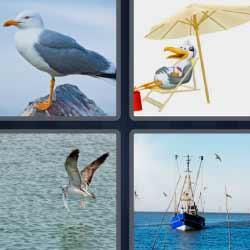 4 fotos 1 palabra barco gaviota