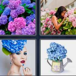 4 fotos 1 palabra flores rosas y azules