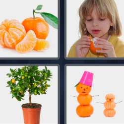 4 fotos 1 palabra mandarinas árbol