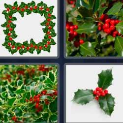 4 fotos 1 palabra planta verde con bolitas rojas
