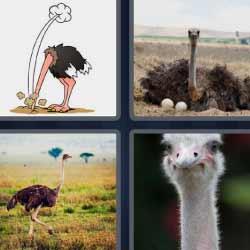 4 fotos 1 palabra cabeza bajo tierra