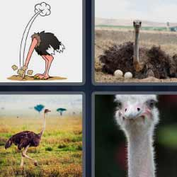 4 fotos 1 palabra ave muy grande