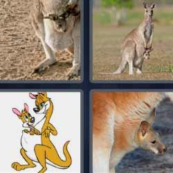4 fotos 1 palabra canguro con su bebé