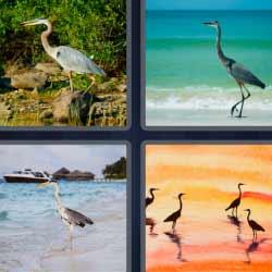 4 fotos 1 palabra pájaro con cuello largo