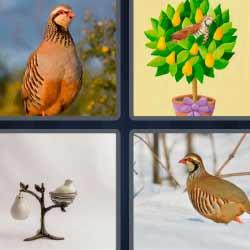 4 fotos 1 palabra pájaro