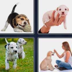 4 fotos 1 palabra cachorros de perrito