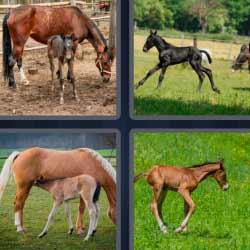 4 fotos 1 palabra caballos pequeños