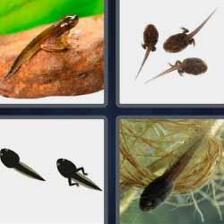 4 fotos 1 palabra larva