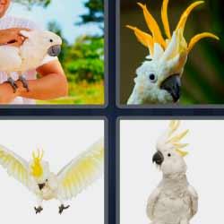 4 fotos 1 palabra pájaro con cresta amarilla