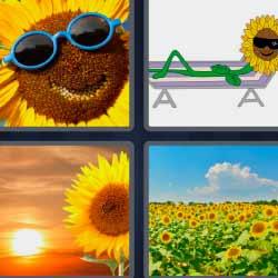 4 fotos 1 palabra flor amarilla