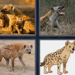4 fotos 1 palabra felino chacal