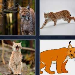 4 fotos 1 palabra tigre pequeño