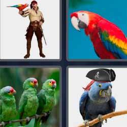 4 fotos 1 palabra loro pirata