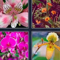 4 fotos 1 palabra flores exóticas