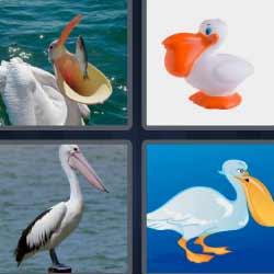 4 fotos 1 palabra pájaro con pico grande