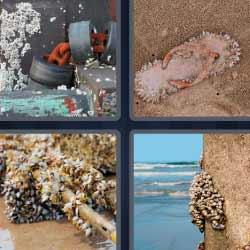 4 fotos 1 palabra moluscos en las rocas