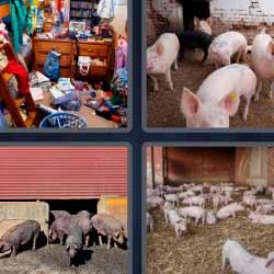 4 fotos 1 palabra unos cerdos
