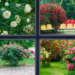 cuatro fotos una palabra flores blancas