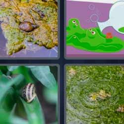 4 fotos 1 palabra caracol