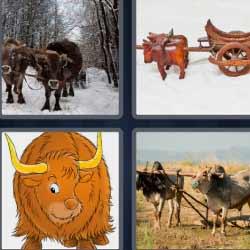 4 fotos 1 palabra buey