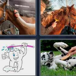 4 fotos 1 palabra peinando caballos