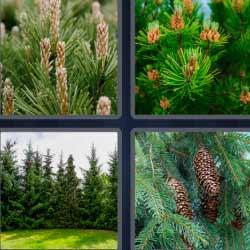 4 fotos 1 palabra pinos