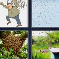 4 fotos 1 palabra abejas en un panal