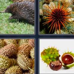 4 fotos 1 palabra erizo