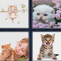 4 fotos 1 palabra 6 letras gatos