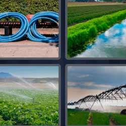 4 fotos 1 palabra cultivos