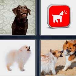 4 fotos 1 palabra perro blanco