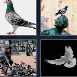 4 fotos 1 palabra pájaro blanco