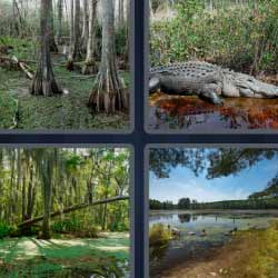4 fotos 1 palabra cocodrilo lago