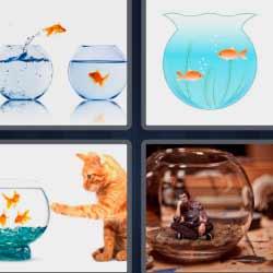 4 fotos 1 palabra peces naranjas