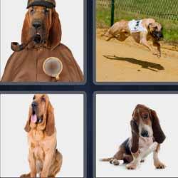 4 fotos 1 palabra perro detective