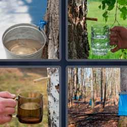 4 fotos 1 palabra corteza de árbol