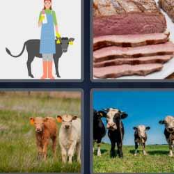 4 fotos 1 palabra vaca becerros