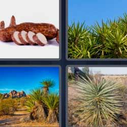 4 fotos 1 palabra plantas como palmeras