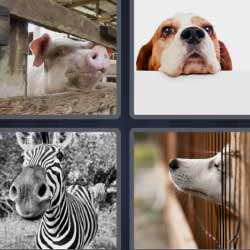 4 fotos 1 palabra puerco