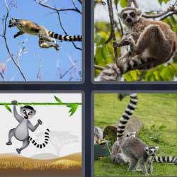 4 fotos 1 palabra mono árbol