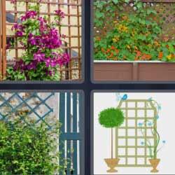 4 fotos 1 palabra flores plantas